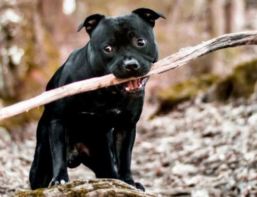 foto cani 4